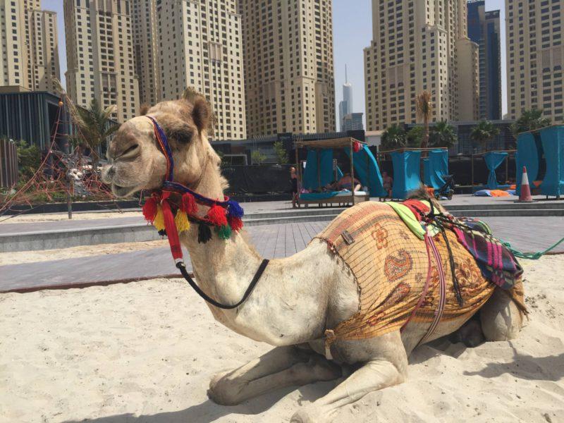 Dubai on a budget